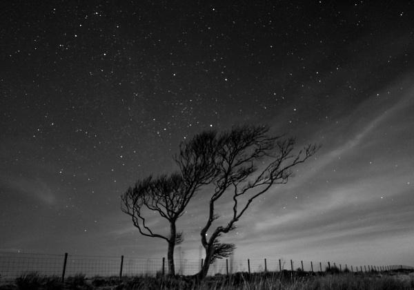 Tree by moonlight by neil john