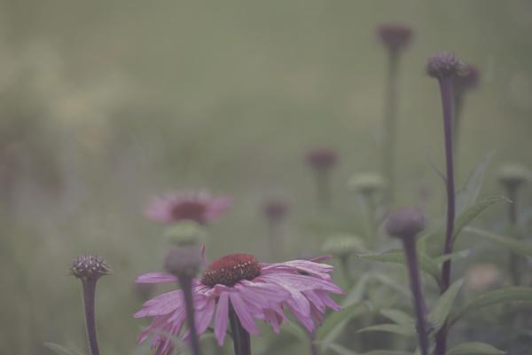 In Bloom by nan1sm