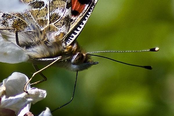 Butterflu detail by Fogey