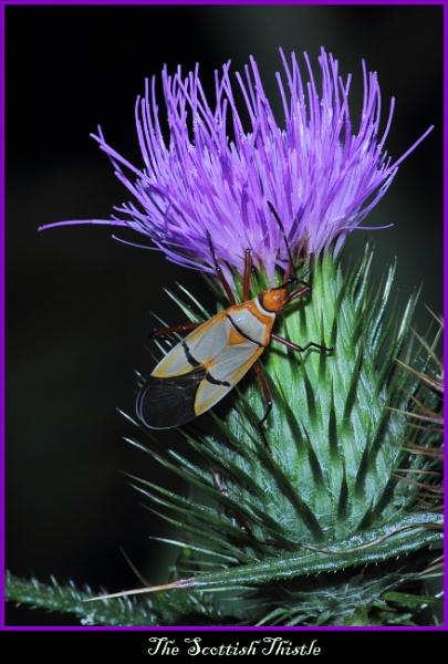 Weed Or Flower Bug
