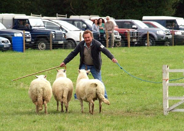 Sheepdog trial by turniptowers
