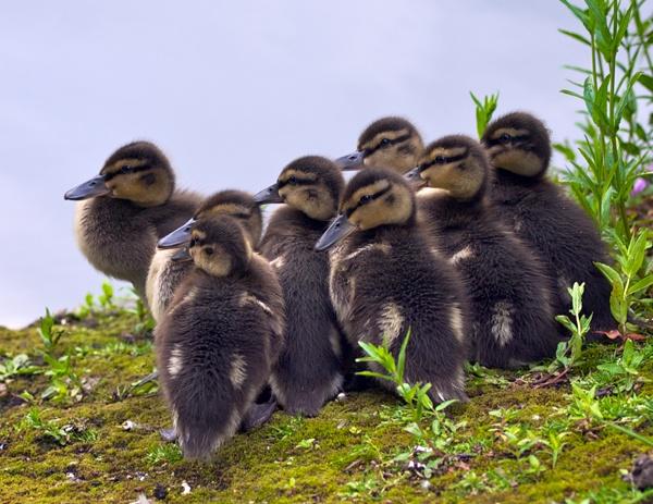 Chicks by victorburnside
