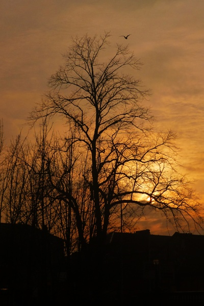 Sunset through tree by Margarets