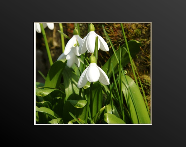 spring by mickr