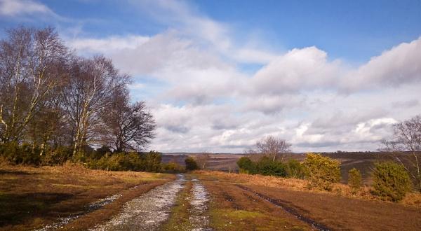 Camera Phone Landscape. by Paintman