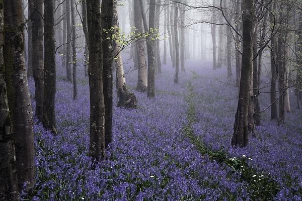 Bells in the Mist by Kris_Dutson
