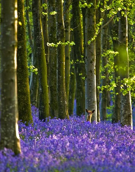 Deer Bells by Kris_Dutson
