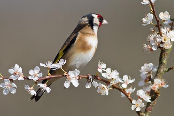 Spring blossom by Brian65