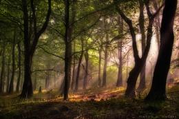 Under Milkwood - Y Wenallt