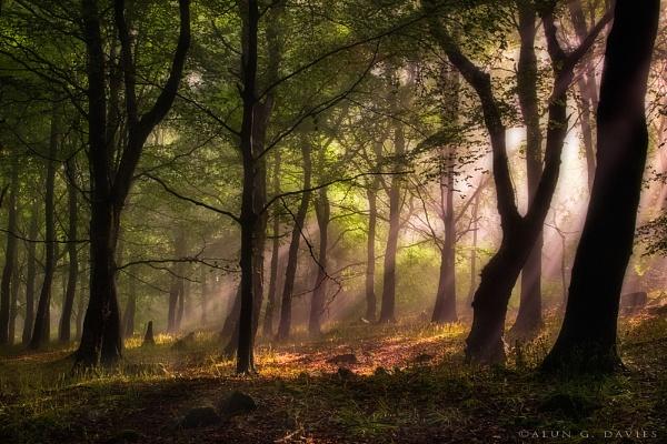 Under Milkwood - Y Wenallt by Tynnwrlluniau