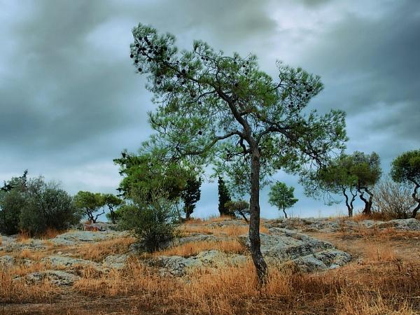 Zeus gardens by atenytom