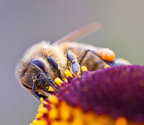 Busy Bee by sdixon2380