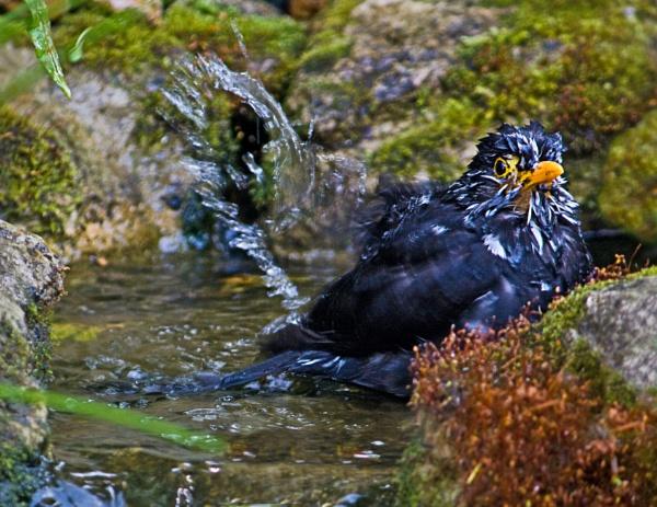 Bath Time by sdixon2380