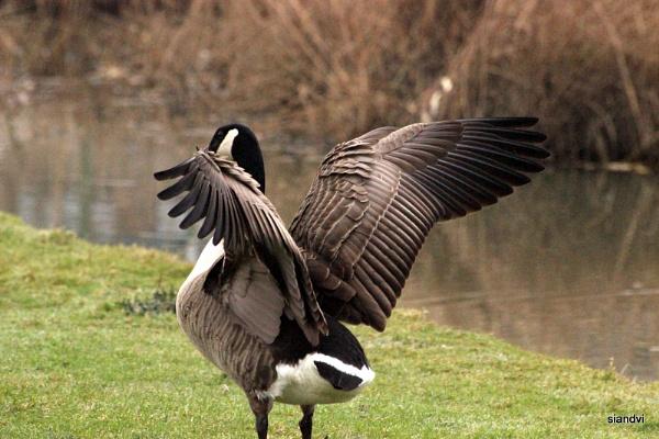 Taking flight by tamasalucy