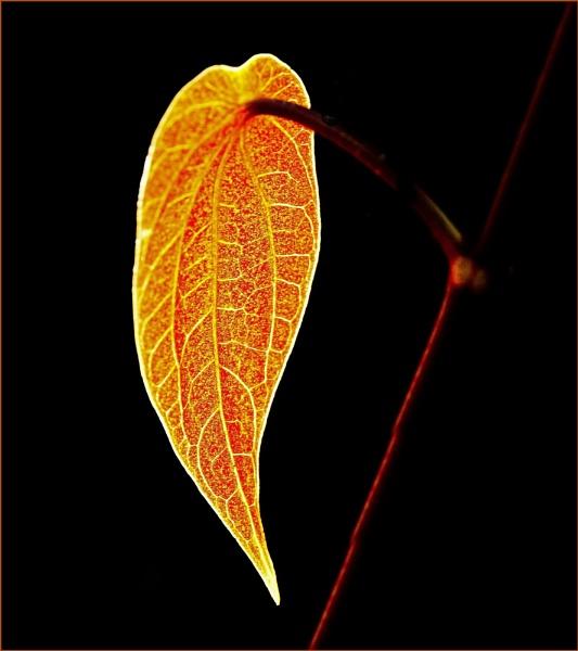 Leaf Art by Berniea