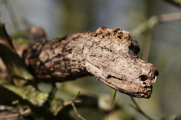 Tree Dragon by haydntaylor