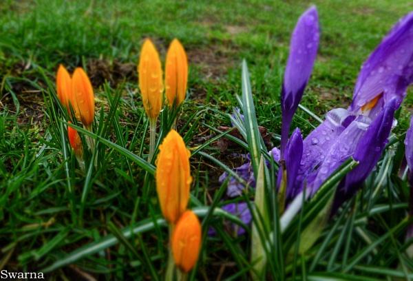 Flowers III by Swarnadip