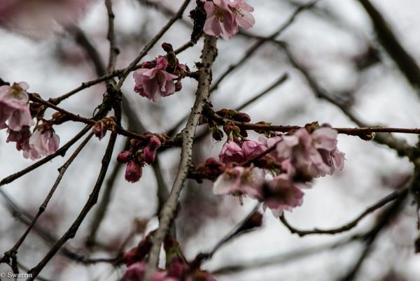 Flowers V by Swarnadip