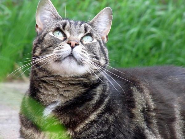 Just feline by MuresMaria