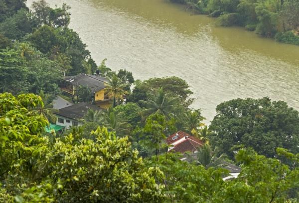 Real jungle living in Sri Lanka by pdunstan_Greymoon
