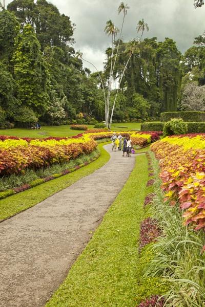 Peradeniya Botanical Gardens, Sri Lanka by pdunstan_Greymoon