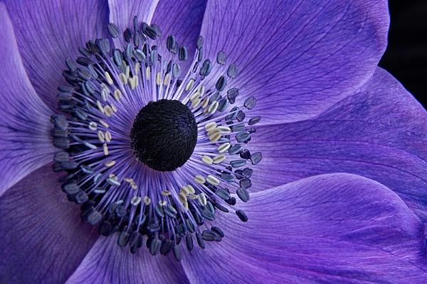 Anemone by ann_g
