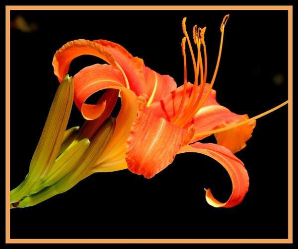 Bloomin\' Beautiful by ColleenA