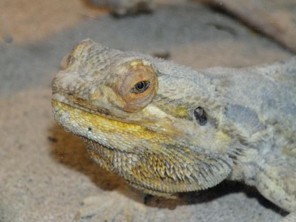 Lizard....... by crissyb
