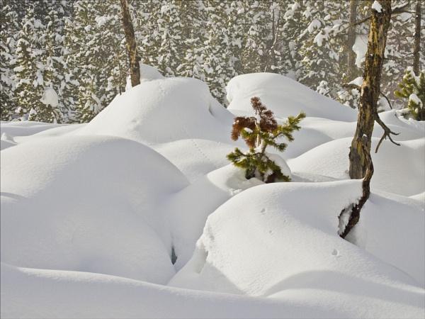 snow landscape by maggietear