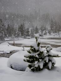 Falling Snow, Yellowstone again!
