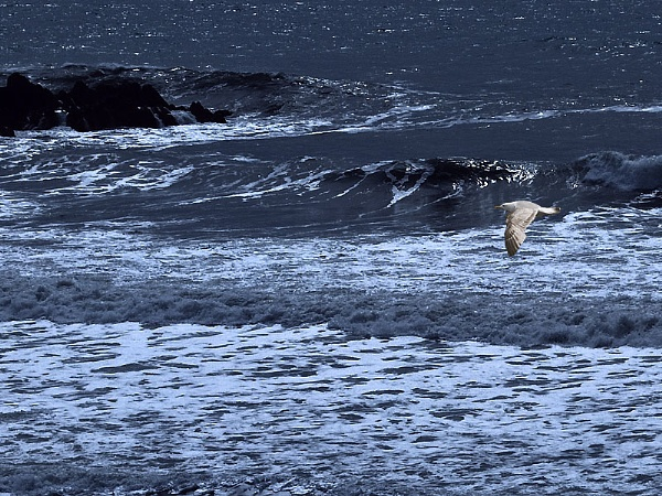 Seagull and Sea by Fogey