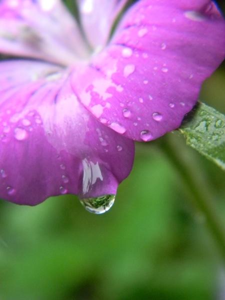 Natures Tear Drop by SabrinaOB
