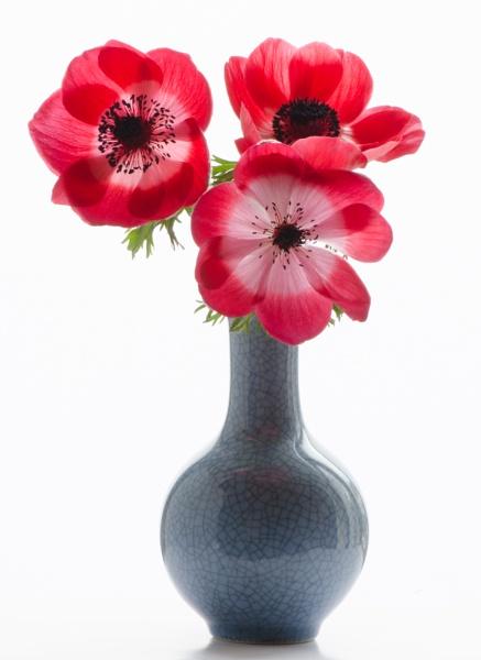 Anemones in blue vase by flowerpower59