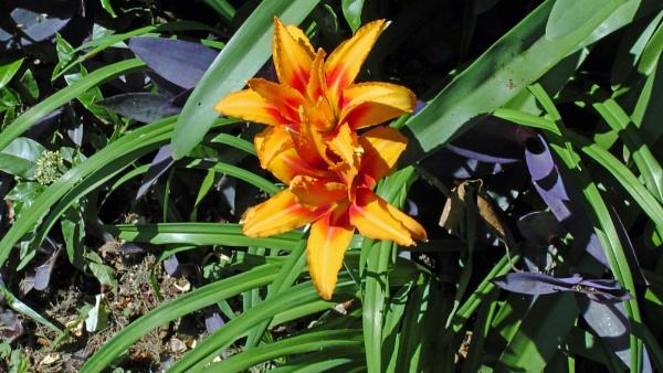 Brazilian Flower by realspeed