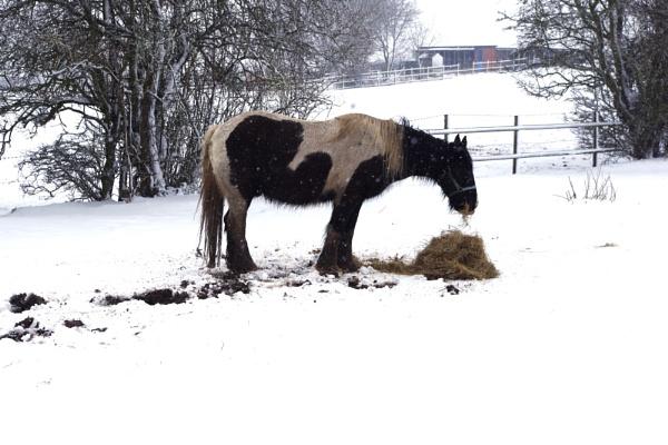 Heavy horse in heavy weather by crobncarol