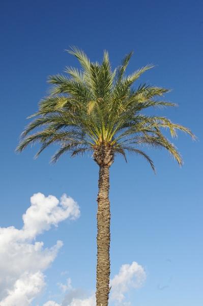 A Palm on Majorca by davevee
