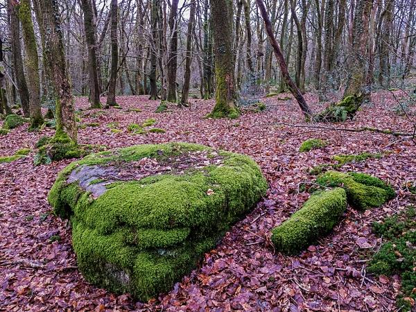 Moss by gary_d