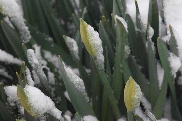 Spring by HeatherR
