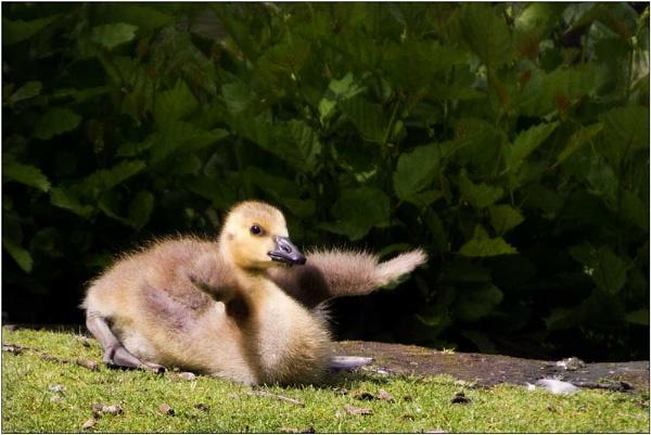 Ducky says Hi :-)