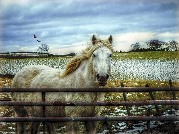 Snowy by OwdBob