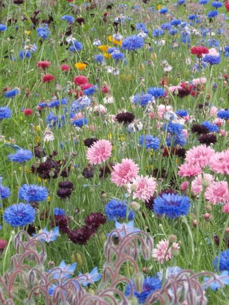 wild flower field by steve51158