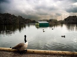 Goose View