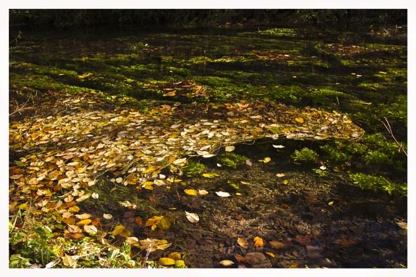 Leaves by davekeen