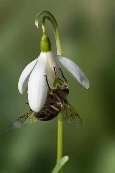 Springtime Forage by Alan_Baseley