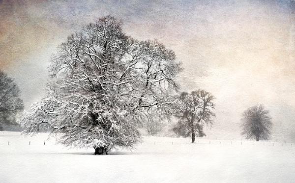 Burwarton tree by dormay
