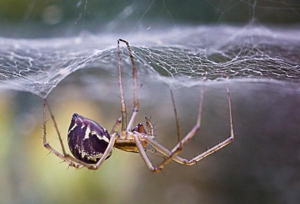 Upsidedown Spider by sdixon2380