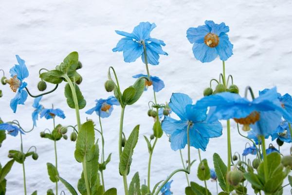 Blue by martib