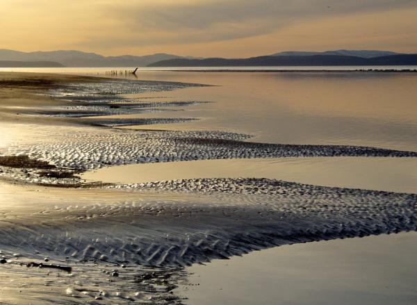 Shipwreck, osprey, seals: Moray Firth by mgts24