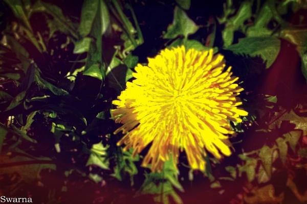 Flowers IX by Swarnadip