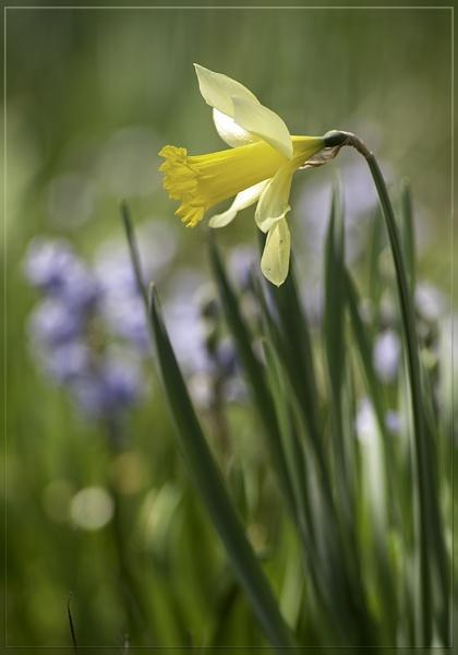 a whisper of spring